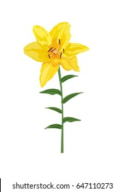 Closeup hand drawn yellow lily flower. Vector illustration isolated on white background for wedding invitation, greeting bouquet and other design