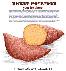 closeup illustration of sweet potatoes isolated in white background.