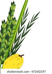 Closeup of Lulav (date palm) ,Etrog (citron) , Arava (willow) and Hadas (myrtle), Four species symbols of the Jewish festival of Sukkot