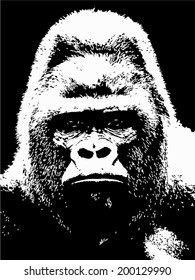 Closeup portrait of a gorilla male, severe silverback, on black background. The most dangerous and biggest monkey of the world. Chief of a gorilla family. Black and white vector illustration