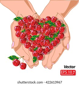 Close-up of two female hands holding offering cherries, isolated on white background vector