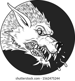 Close-up of a wild, angry, wolf with big fangs. Vector illustration