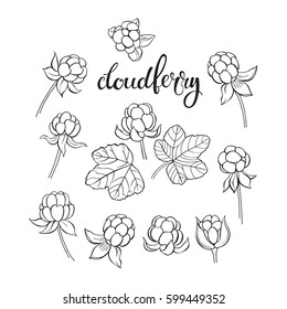 Cloudberry. Vector hand-drawn illustration on a white background. Collection of isolated outline elements for design.