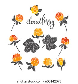 Cloudberry. Vector hand-drawn illustration on a white background. Collection of isolated  elements for design.