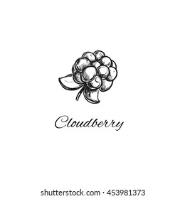 Cloudberry. Vector illustration in sketch style