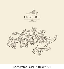 Clove tree: buds of cloves. Vector hand drawn illustration.