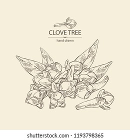 Clove tree: buds and leaves of cloves. Vector hand drawn illustration.