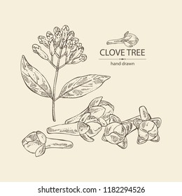 Clove tree: buds and leaves. Vector hand drawn illustration.