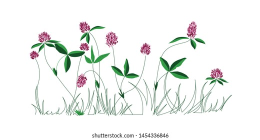Clover. Flowers panoramic border. Floral illustration. Handwhrite picture.