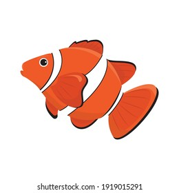 The clown fish is a marine animal that swims underwater. Vector illustration of cartoon amphiprion isolated on white background.