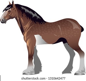Clydesdale Horse,   Animal , Draught Stallion Galop - Vector Illustration