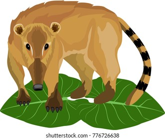 Coati liitle animal of south american jungle, wildlife nature theme, vector.