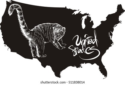 Coati and U.S. outline map. Black and white vector illustration.