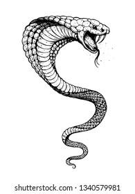 Cobra snake hand drawn illustration. Tattoo vintage print. Hand drawn print. Tattoo design. Sketch illustration.