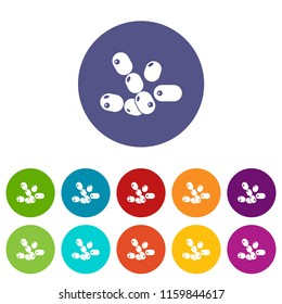 Coccus bacilli icons color set vector for any web design on white background