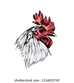 cock head in profile, sketch vector graphic color illustration
