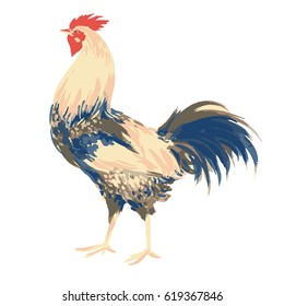 Cock isolated on white background, rooster art, print, decoration, colorful, illustration, watercolor