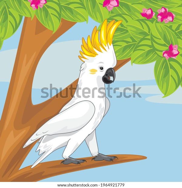 cockatoo-on-branch-flowering-tree-600w-1