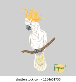 Cockatoo parrot  Tropical bird. Colored Vector illustration without gradients and transparency.