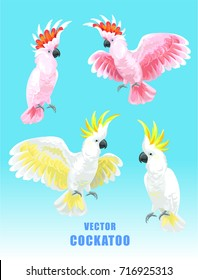 Cockatoo set. Vector isolated elements on the white background.