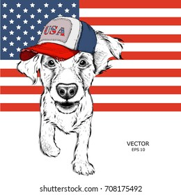 Cocker Spaniel in an American cap. Puppy on the background of the American flag. Vector illustration