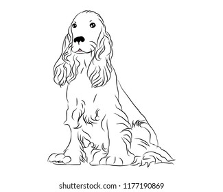 Cocker spaniel cute dog vector illustration golden color detailed pet for pet supply care business  breed icon animal