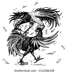 Cockfight or gamecocks. Bird sport on the farm. Hand drawn engraved sketch. pets in vintage style. two roosters on white background. Vector illustration.