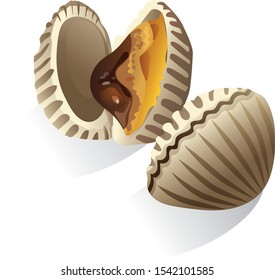 Cockle Seafood Vector, White Background