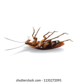 cockroach dead isolated white background