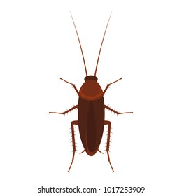 Cockroach illustration. Vector. Isolated.