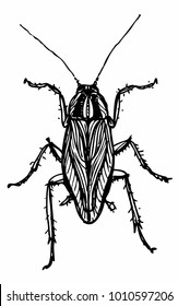 Cockroach ink drawing isolated on white