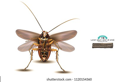 Cockroaches fly as many carriers of various pathogens.