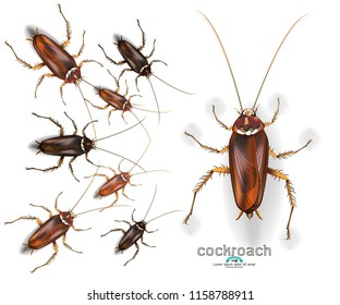 Cockroaches laying on the floor Cockroach on white background. Insects symbol vector. Abstract eps 10