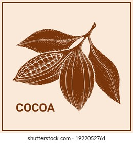 Cocoa beans colorful chocolate image.  Hand drawn design. Vector illustration.