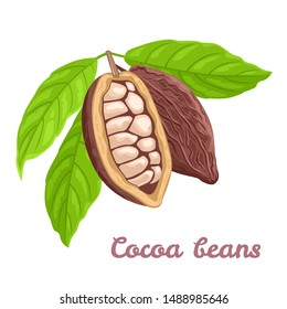 Cocoa beans and green leaves isolated on white background. Vector illustration of cacao beans, chocolate beans in cartoon flat style. Superfood.