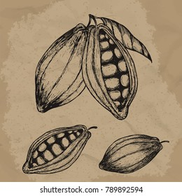Cocoa beans hand drawn illustration. Chocolate cocoa beans. Vector illustration