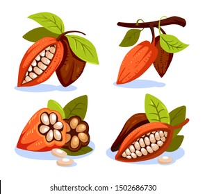Cocoa beans illustration cartoon style. Chocolate cocoa beans tree.  Composition of Cocoa, design template for emblems. Cacao plant. Vector illustration