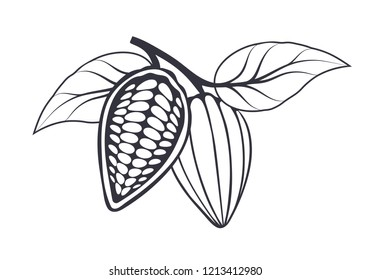 Cocoa beans with leaves on white background. Vector illustration.