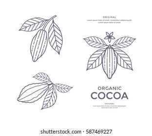 Cocoa beans line icon or emblem. Sign for cacao powder. Vector illustration