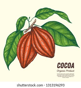 Cocoa beans vector illustration. Hand drawn. Chocolate design. Chocolate beans. Vintage illustration. Cocoa pod.