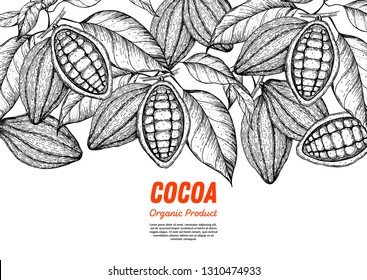 Cocoa beans vector illustration. Cocoa pods sketch. Chocolate beans. Vintage design. Hand drawn illustration.  Organic healthy food sketch.