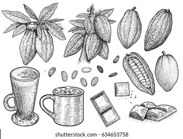 Cocoa illustration, drawing, engraving, ink, line art, vector