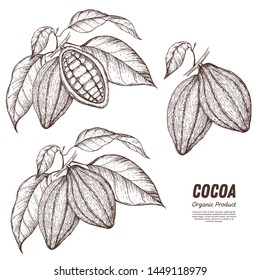 Cocoa pods vector illustration. Hand drawn sketch collection. Chocolate design. Chocolate beans. Vintage illustration. Cacao fruit for design.