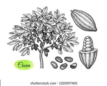 Cocoa set. Tree, pods and beans. Ink sketch isolated on white background. Hand drawn vector illustration. Retro style.