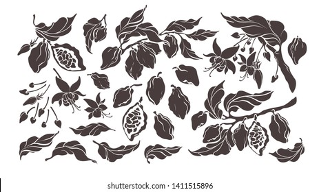 Cocoa set. Vector nature elements. Botanical art shape of tree, bean, fruit, leaf, flower. Group of isolate on white background. Organic tropical food. Cacao sweet drink, natural chocolate