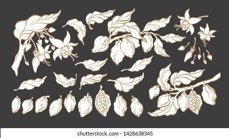 Cocoa. Silhouette set. Vector nature shape. Botanical art line sketch of bean, fruit, leaf, flower. Group isolate. Organic tropical food. Cacao sweet drink, natural chocolate