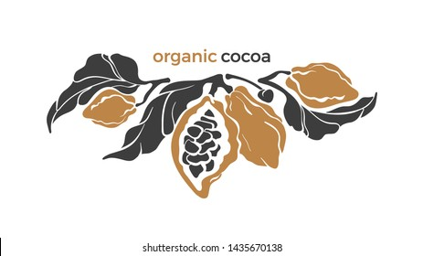 Cocoa. Vector nature branch. Tropical template, farm plantation. Art shape, bio design. Natural chocolate food, aroma drink. Floral card. Farm harvest. Vintage card on white background