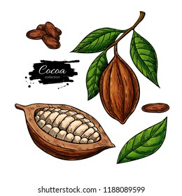 Cocoa vector superfood drawing set. Organic healthy food sketch. Isolated hand drawn  illustration on white background. Great for banner, poster, label