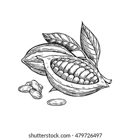 Cocoa vector superfood drawing set. Isolated hand drawn  illustration on white background. Organic healthy food. Great for banner, poster, label