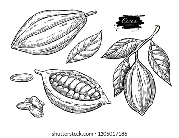 Cocoa vector superfood drawing set.Organic healthy food sketch. Fruit, leaf and bean engraving. Isolated hand draw  illustration on white background. Great for banner, poster, label